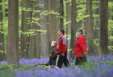 Wandelaars in Brakelbos tussen de boshyacinten
