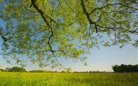 bos en natuur