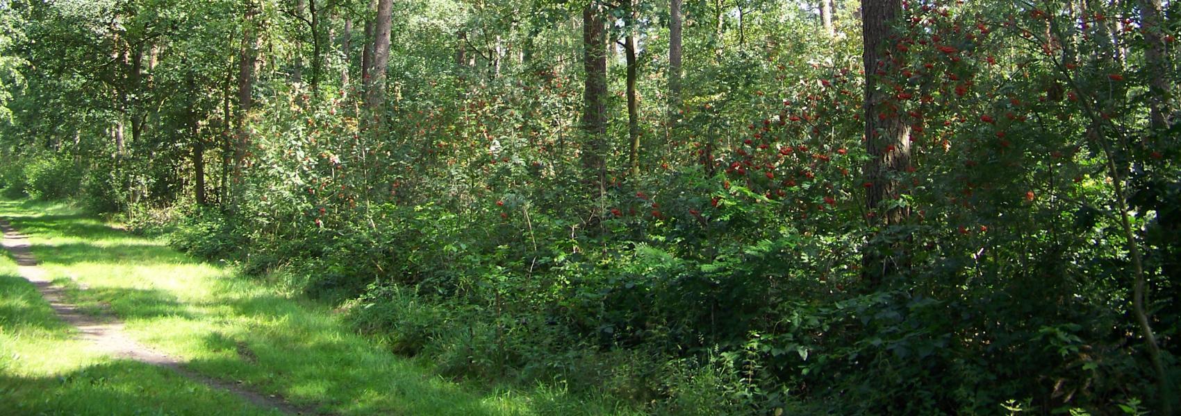 Landschapsbeeld Grootdonckheide