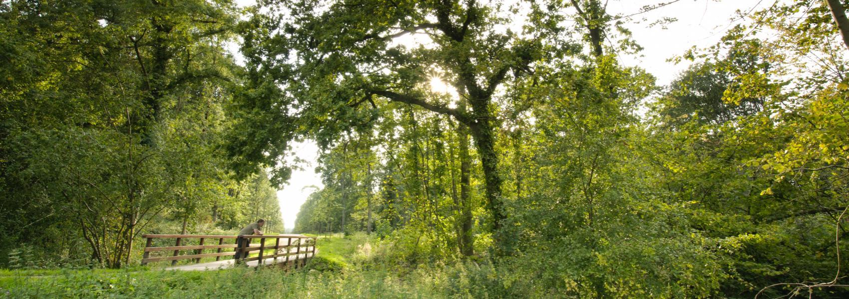 man leunend op brugje in het bos