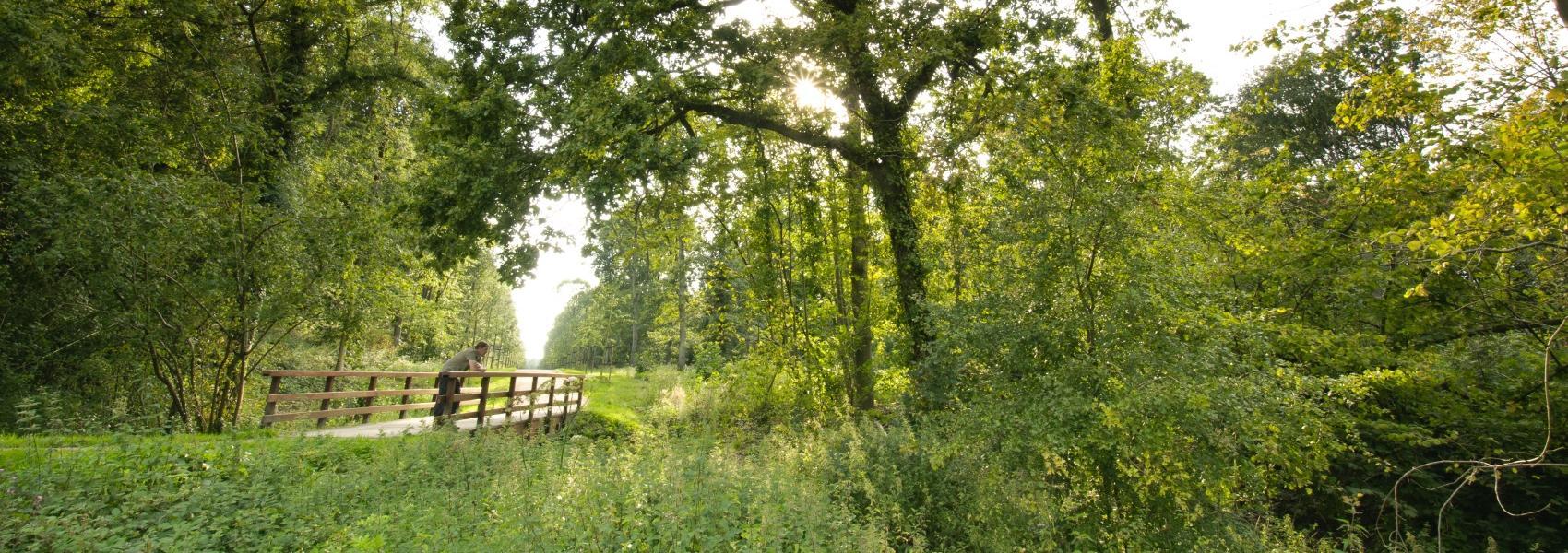 man op brugje in het bos