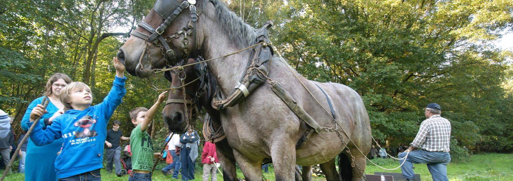 kinderen bij trekpaarden