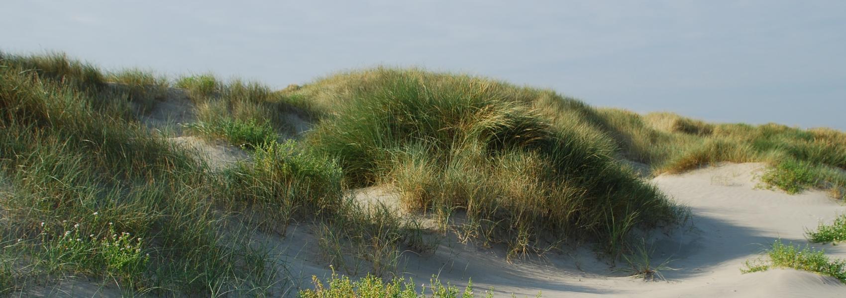 duinenlandschap