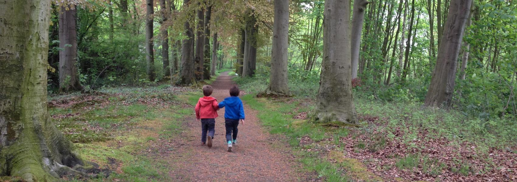 Beukendreef Vinderhoutse bossen - Griet Buyse
