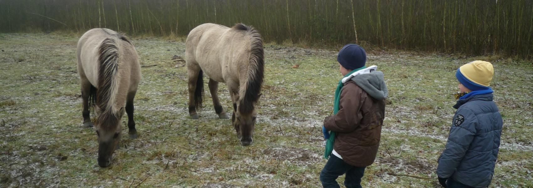 kinderen bij konikpaarden