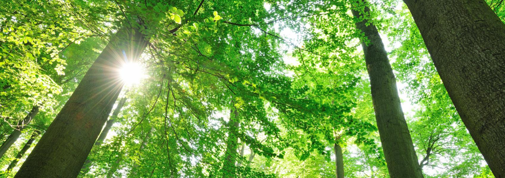 zicht op de bomen (kikkerperspectief)
