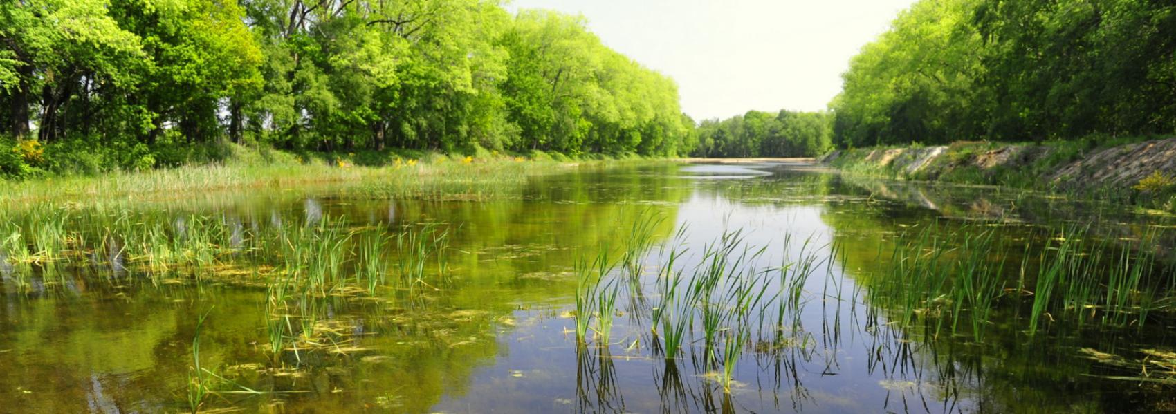 zicht op het water het water tussen de bomen