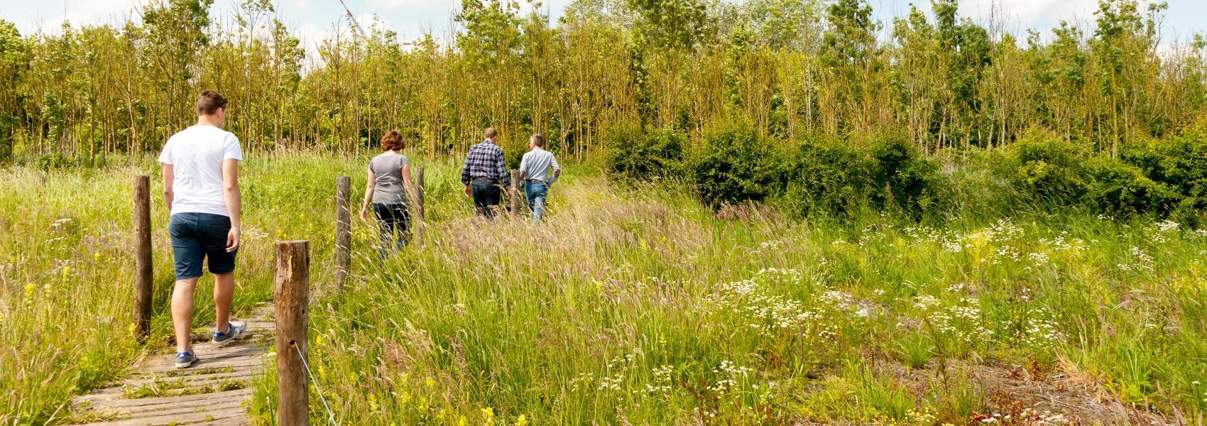 4 wandelaars in het landschap
