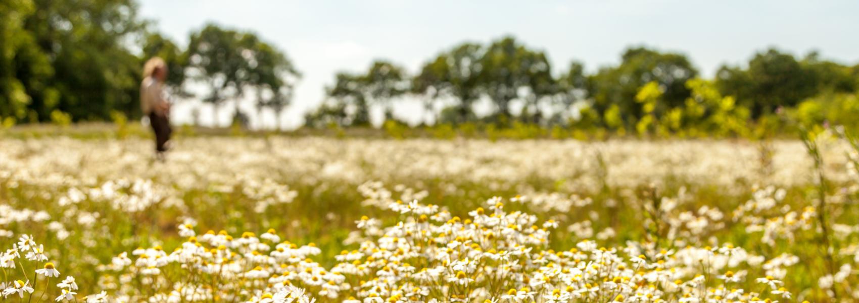 zicht op een bloemenveld
