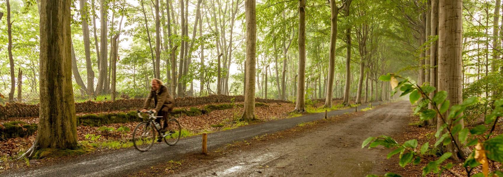 fietser in bos
