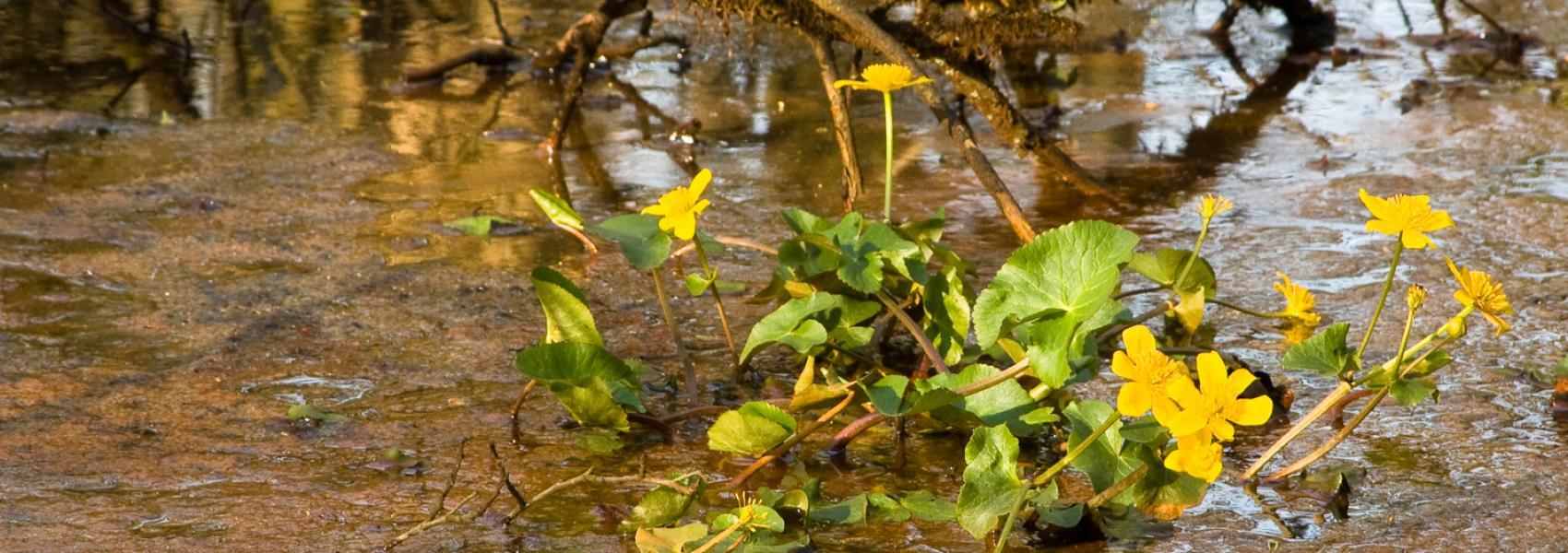 bloemen in het water