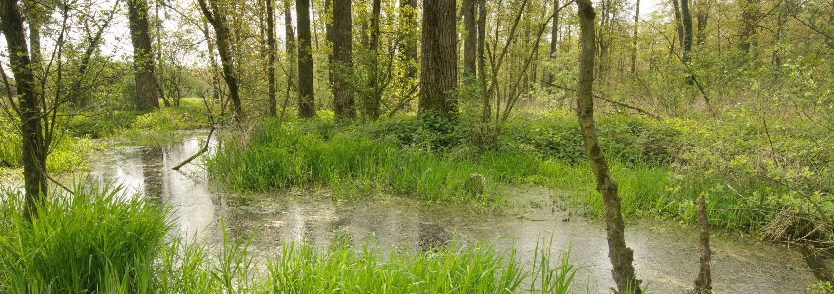 water in het bos