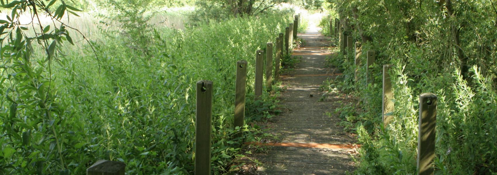 een knuppelpad (houten pad)