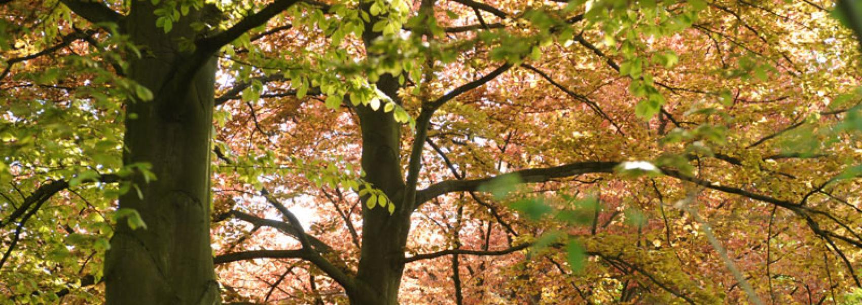 een koppel bomen