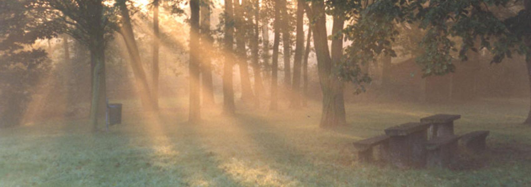 zonnestralen door het bos