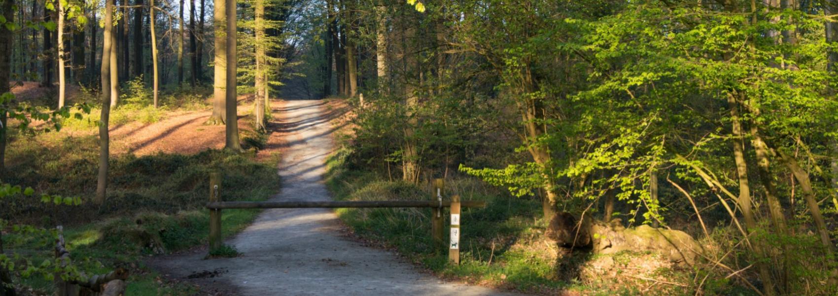 wandelpad in het bos
