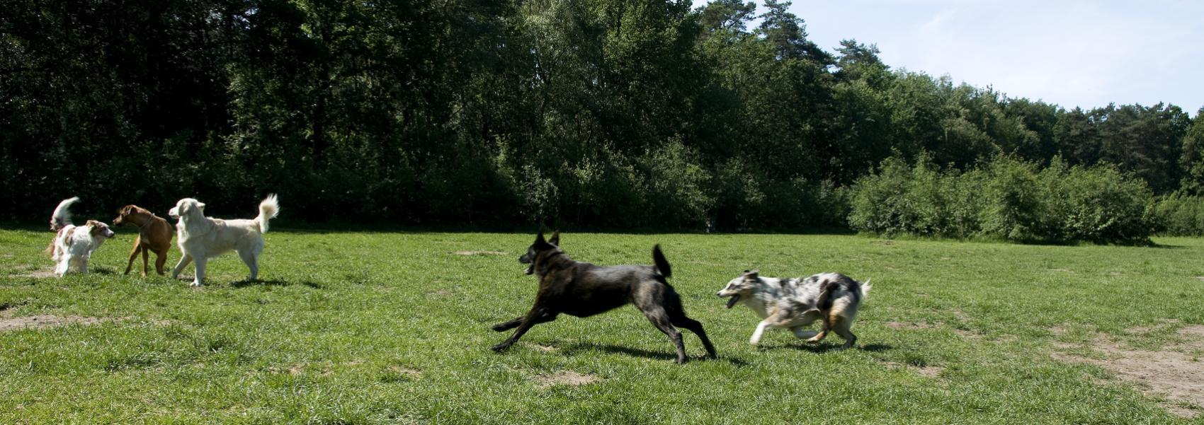 Hondenzone in de Brusselse Bossen