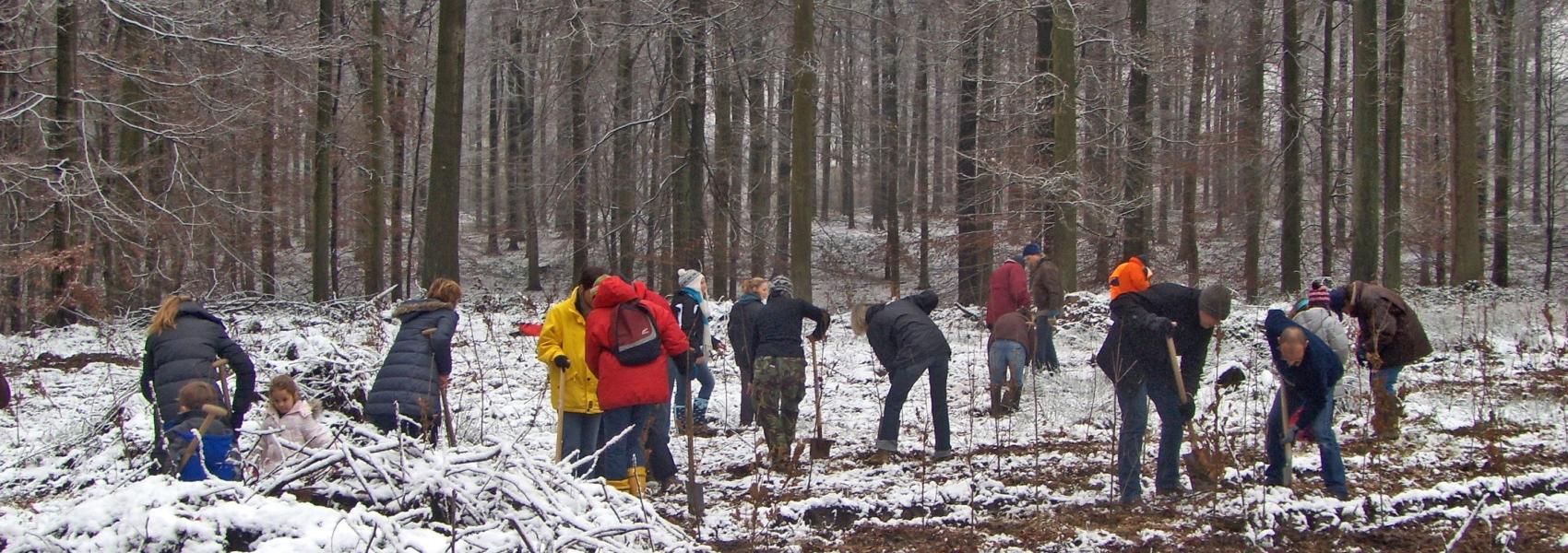 boomplantactie in de sneeuw