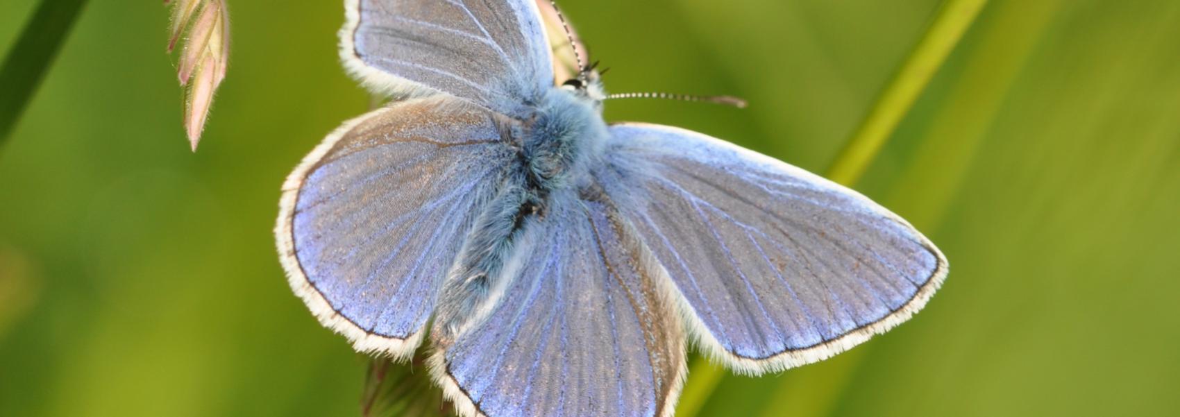 een vlinder
