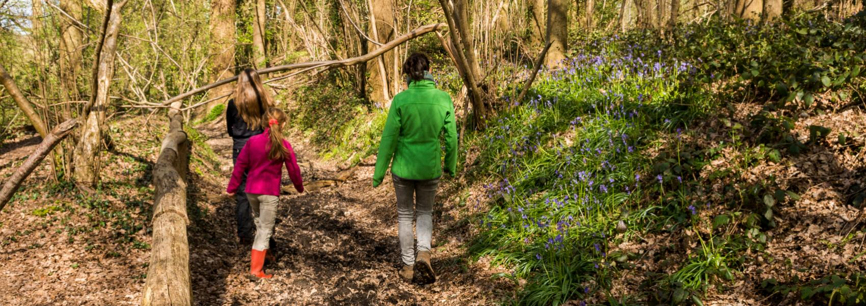 3 wandelaars in het bos
