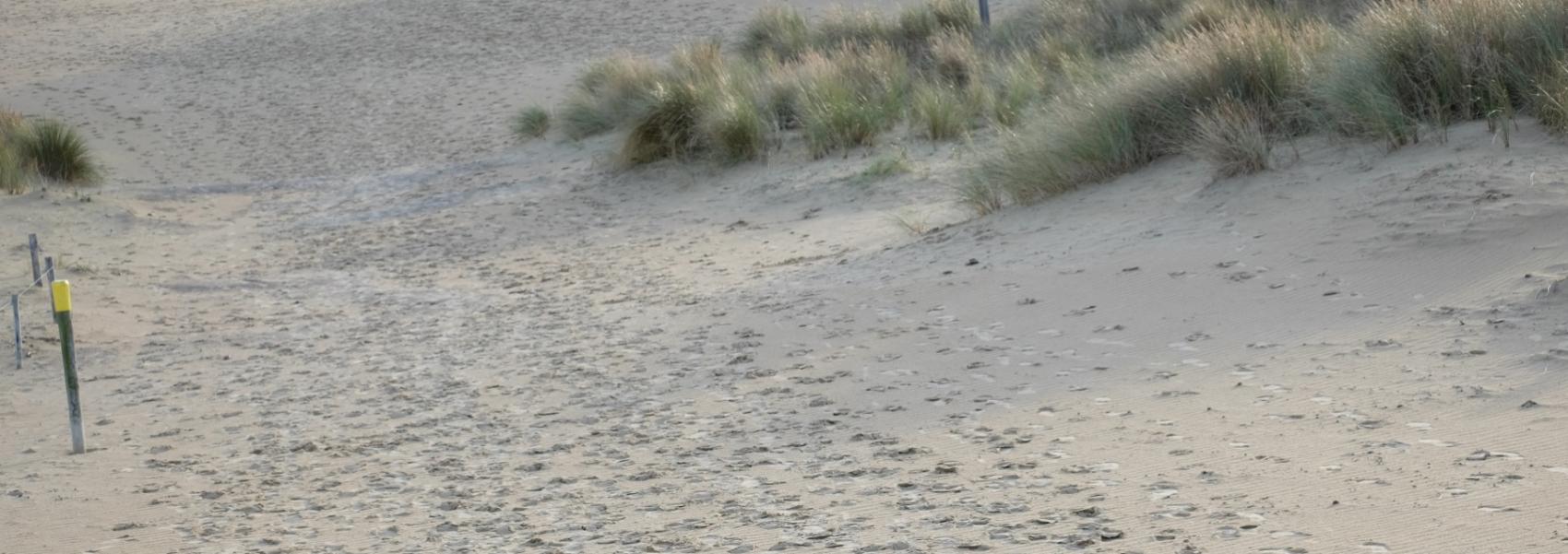 wandelpad in de duinen vol met voetstappen