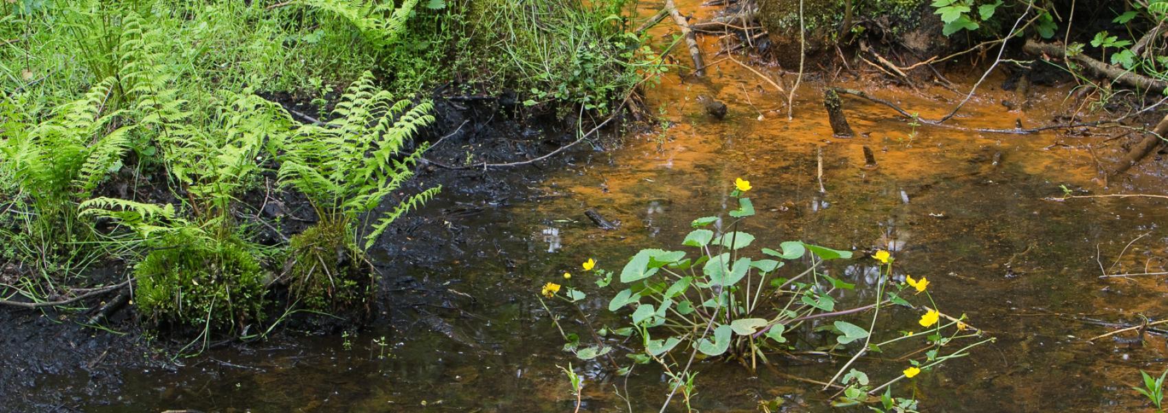 planten in het water