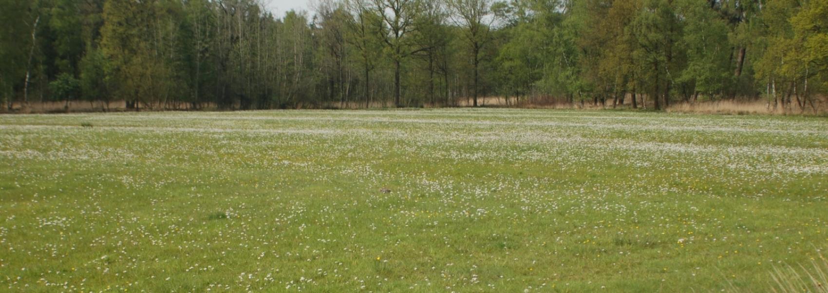 Graslandschap in Elsakker