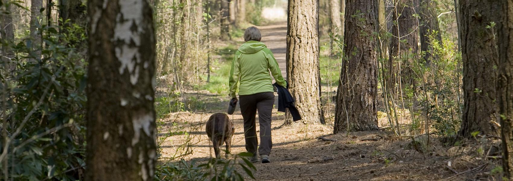 wandelaarster met hond in het bos