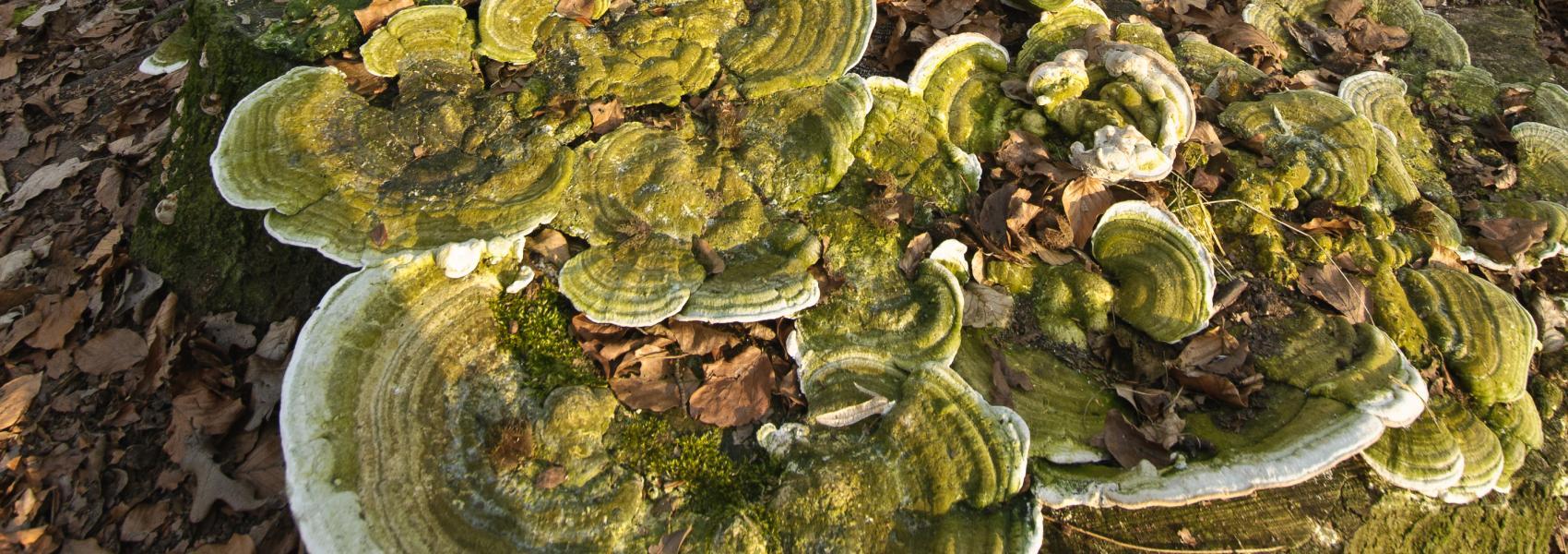 paddenstoelen in het bos