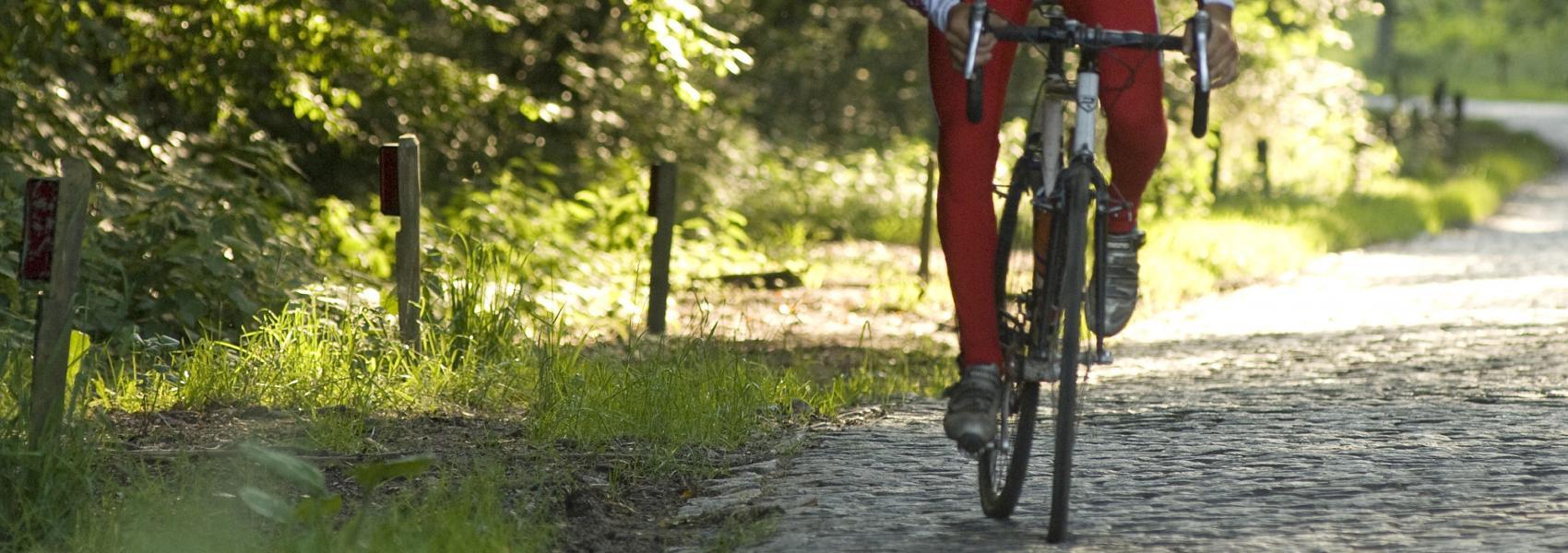 fietser beklimt de bosberg