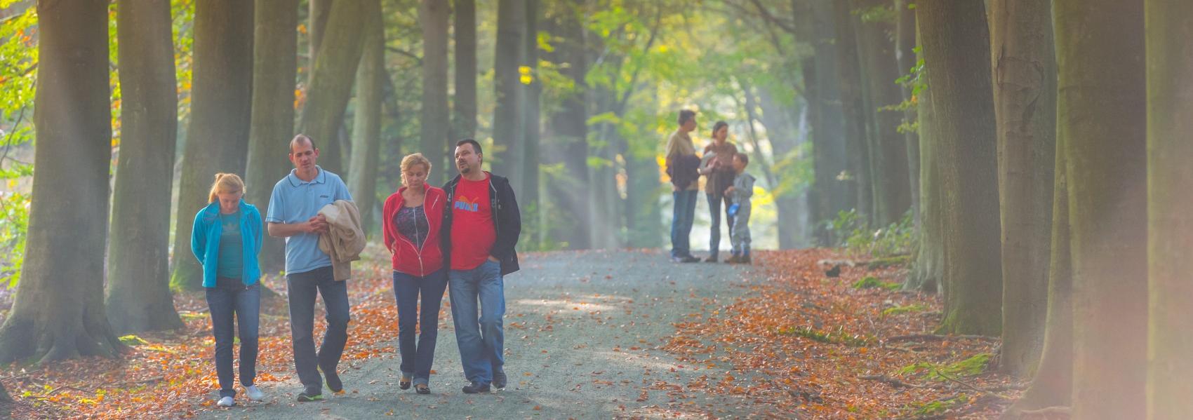 Wandelaars Heverleebos en Meerdaalwoud
