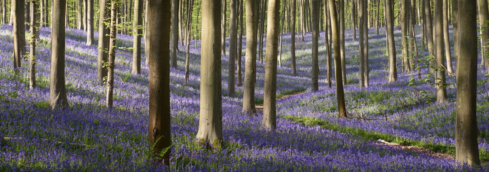 bloemenweide in het bos