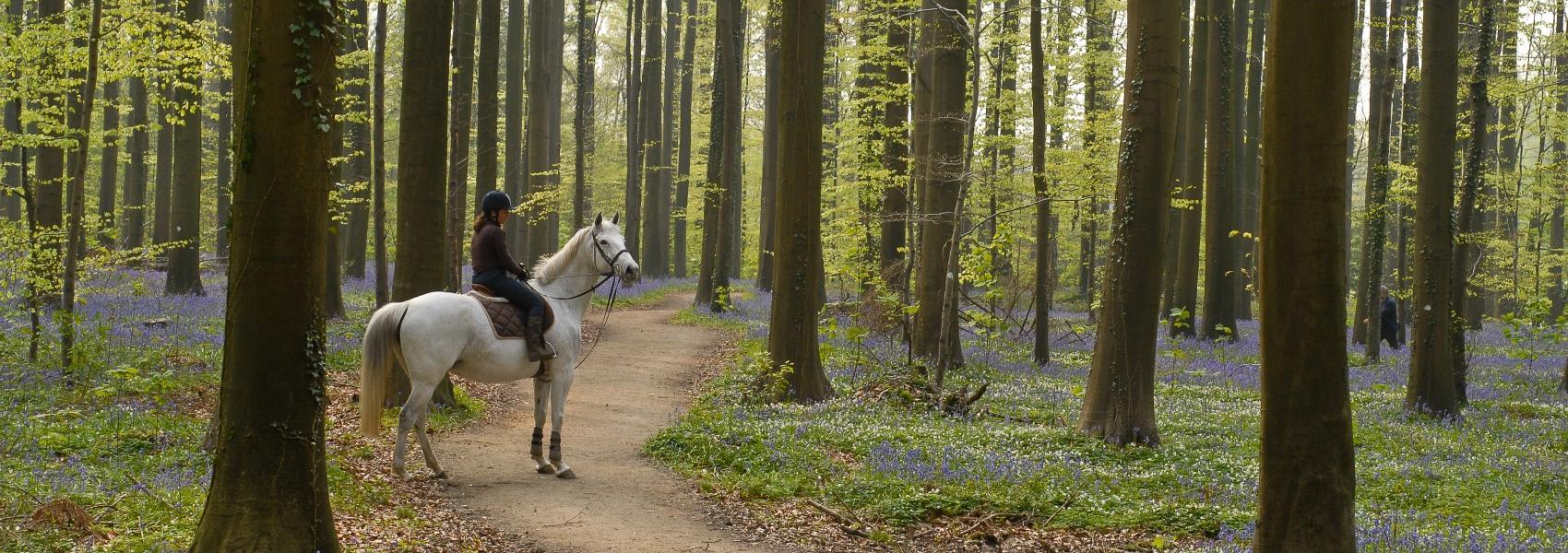 ruiter in het bos