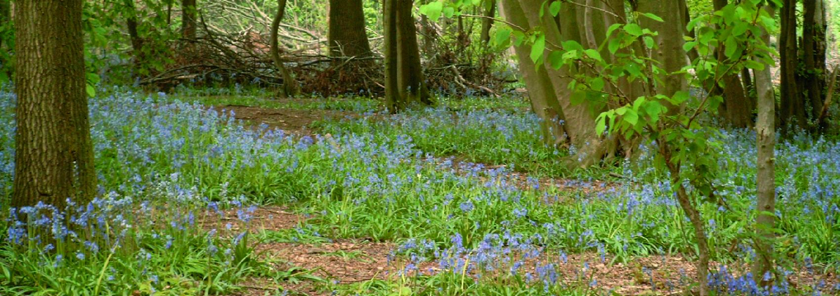paarse bloemen in het bos