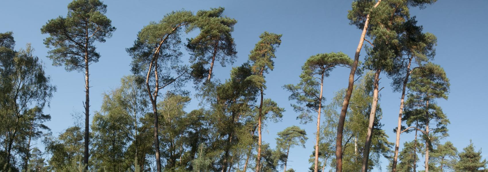 zicht op een bomenrij