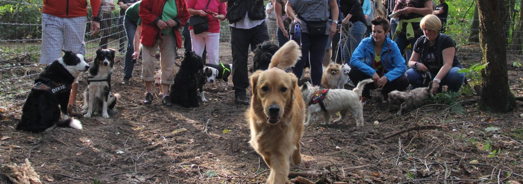 groep mensen met honden in de hondenlosloopzone