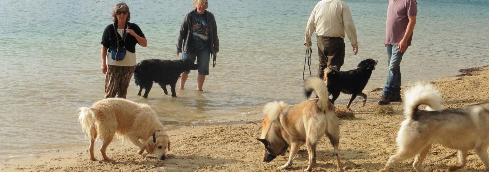 Hondenzone