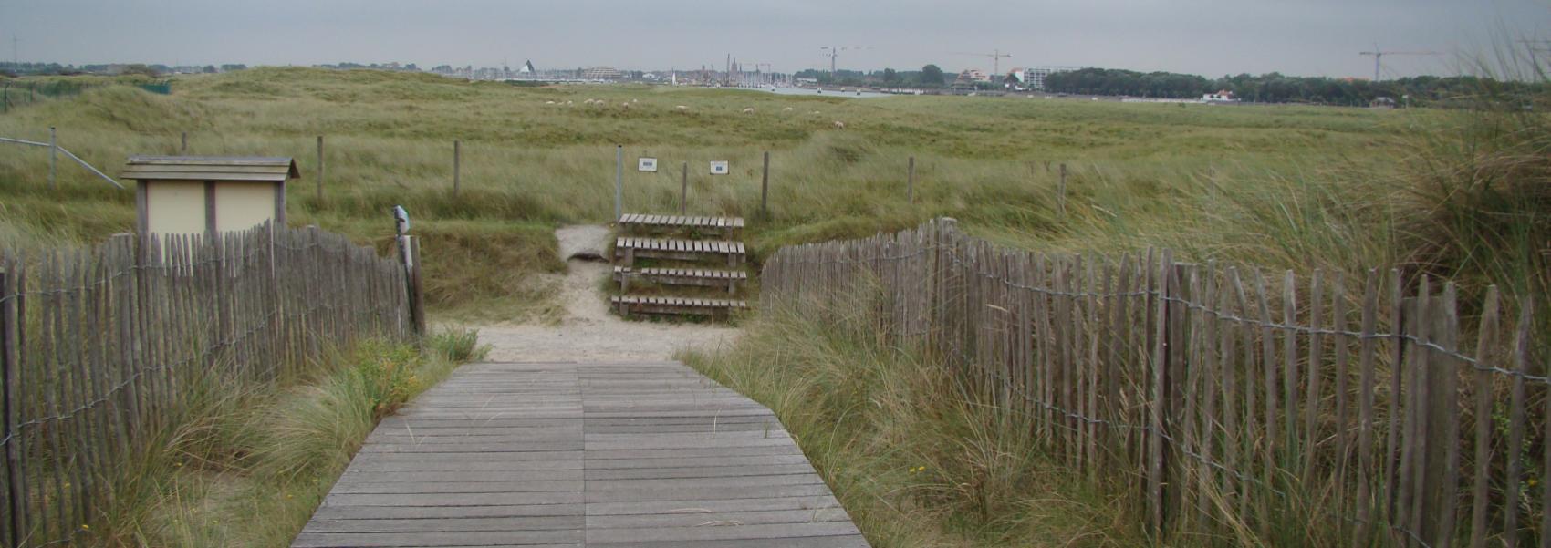 houten wandelpad in het landschap