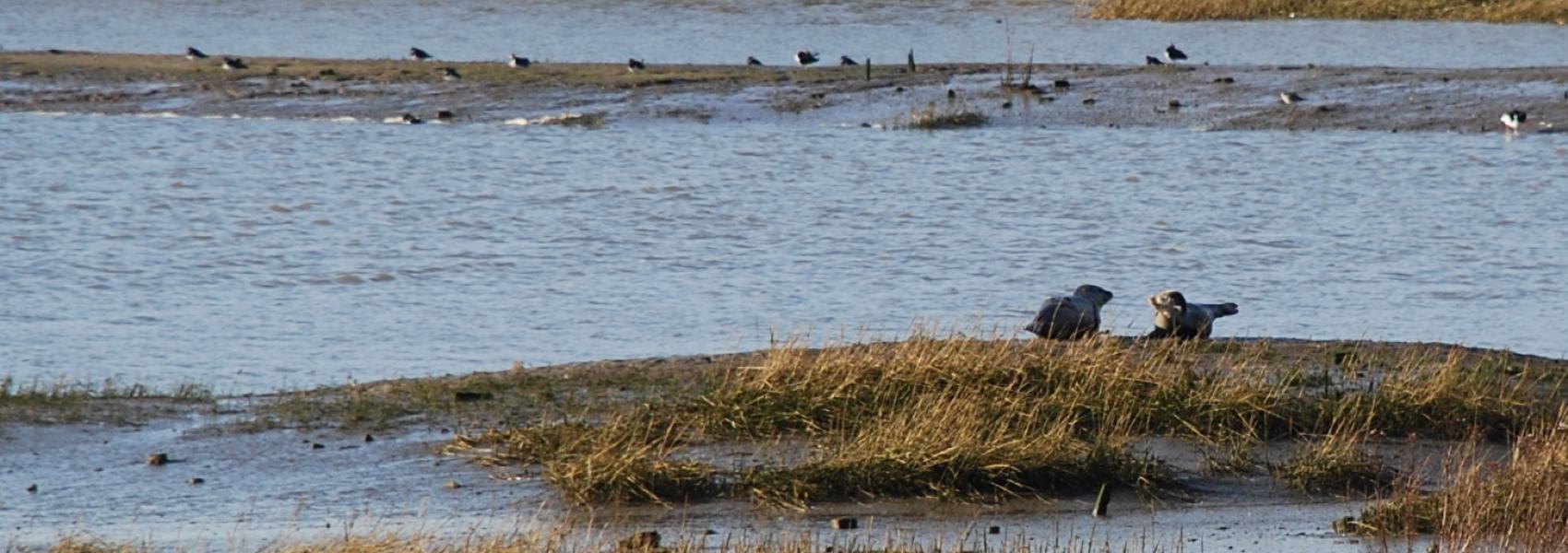 zeehondjes bij het water