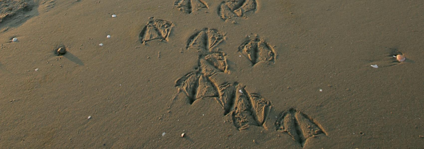 vogelsporen in het zand
