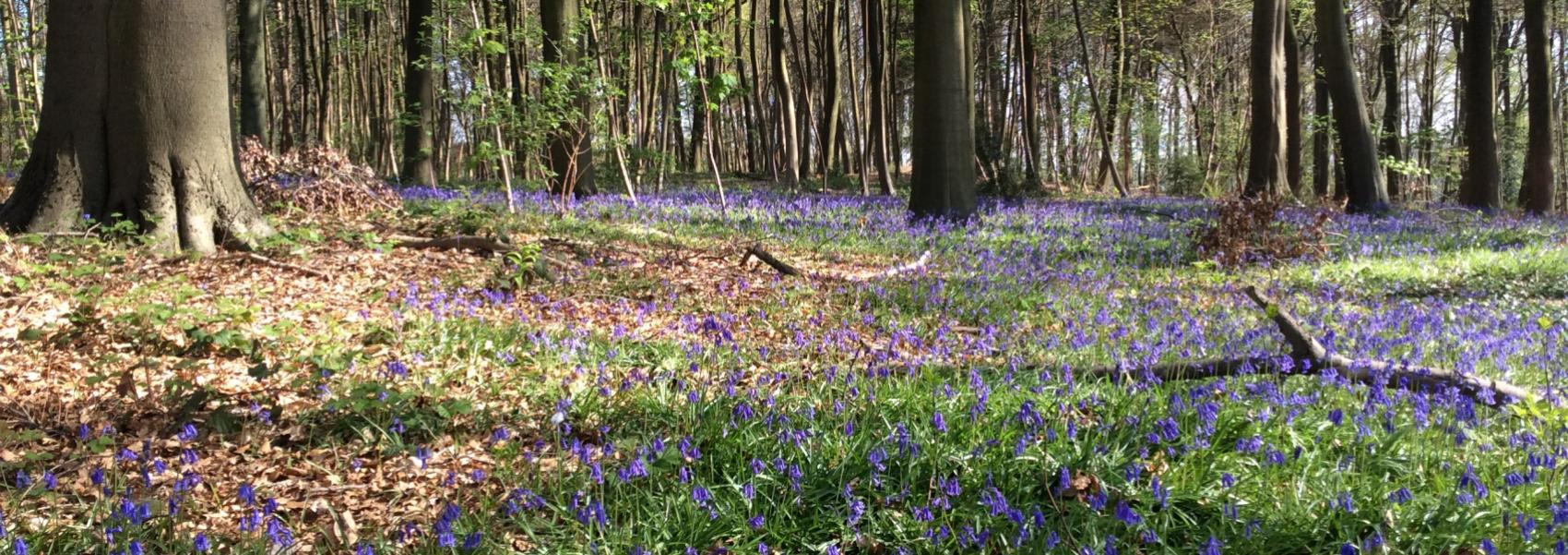 paarse bloemenweide in het bos