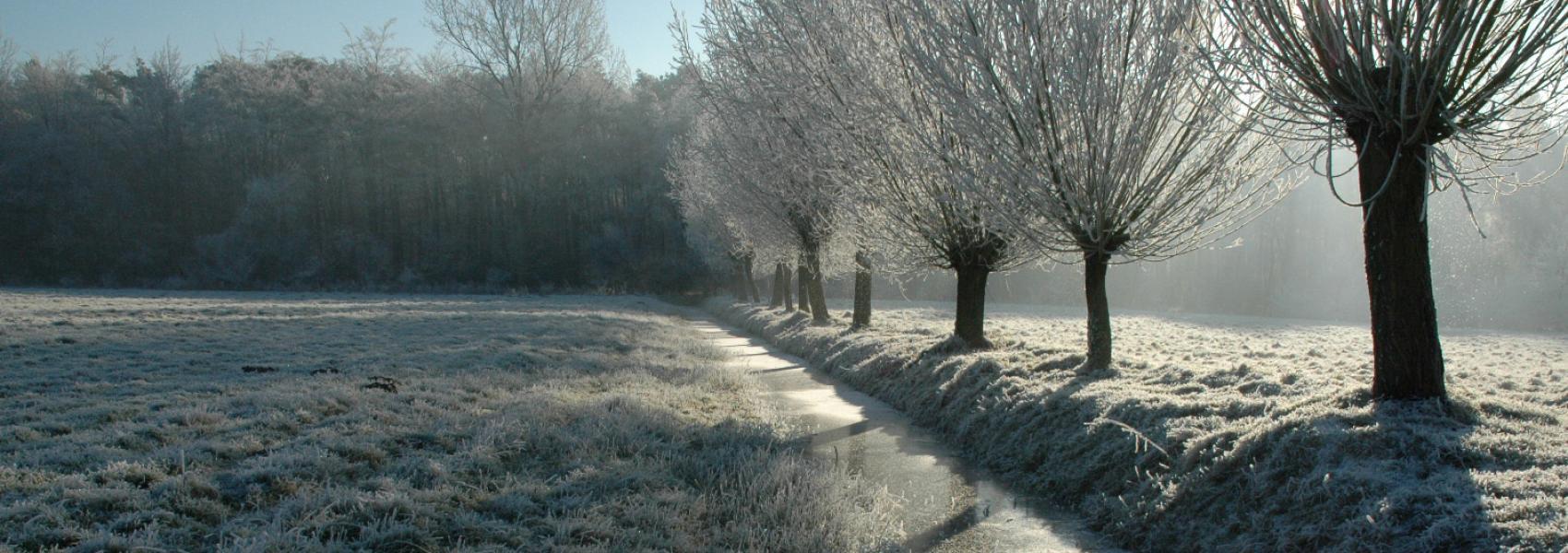 zicht op een winterslandschap