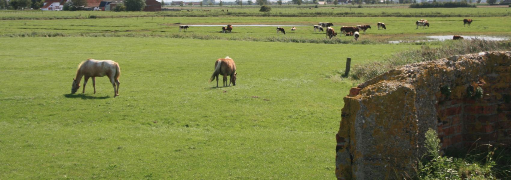 paarden in de weide met aan de zijkant een bunker
