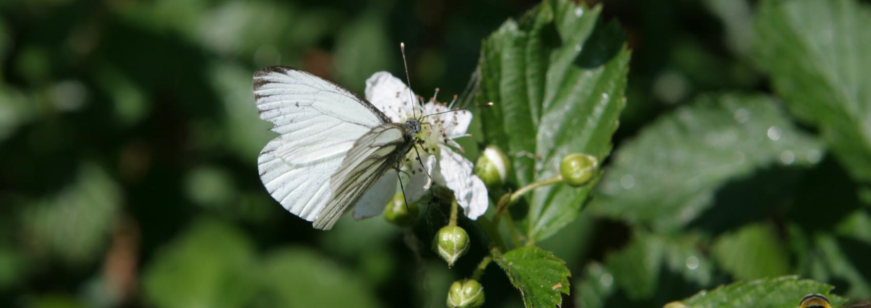 een vlinder en bij op een plant