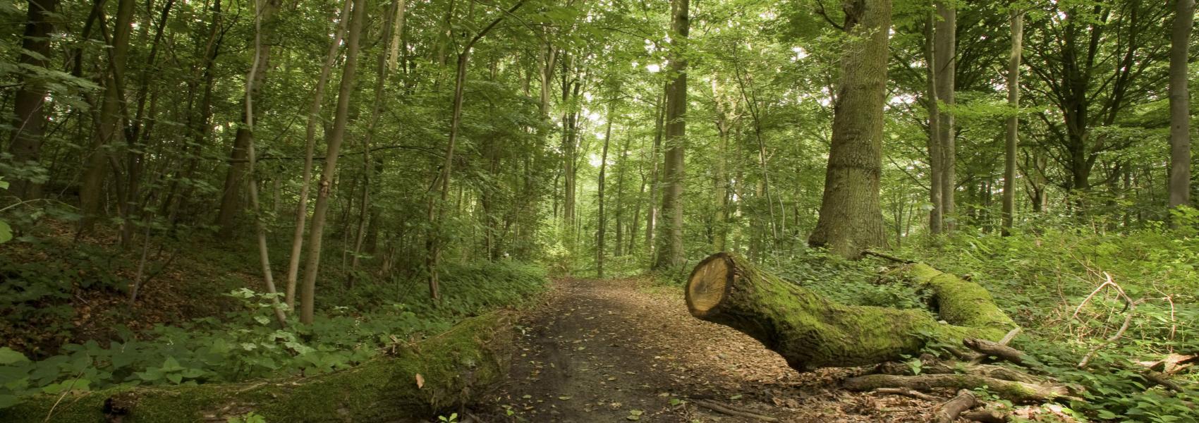 omgevallen boom aan de dreef in het bos