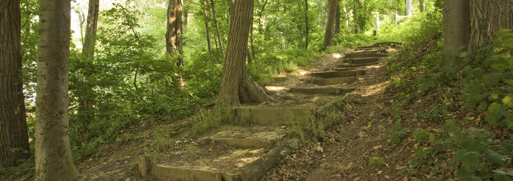 houten trap in het bos