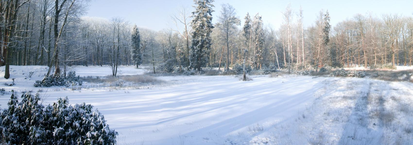 winter in het Mastenbos