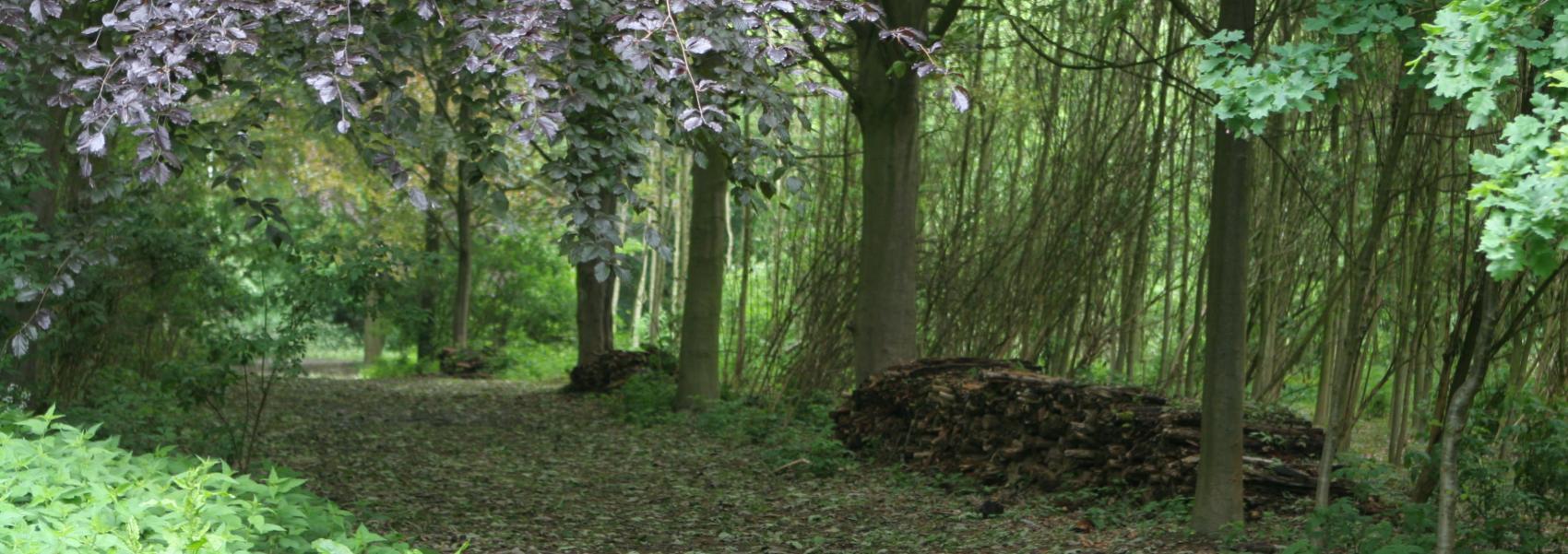 wandelpad overdekt met bladeren en met een stapel hout aan de kant