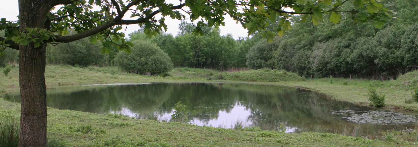 zicht op het landschap van het orveytbos