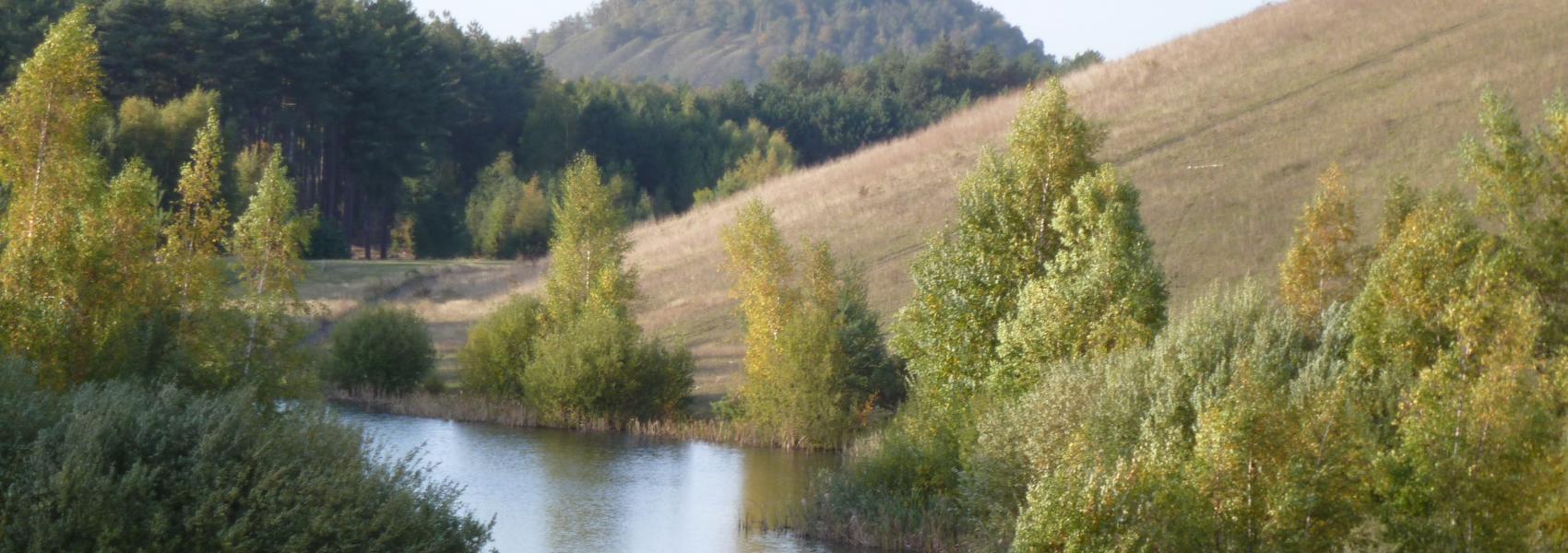 vijver in het landschap